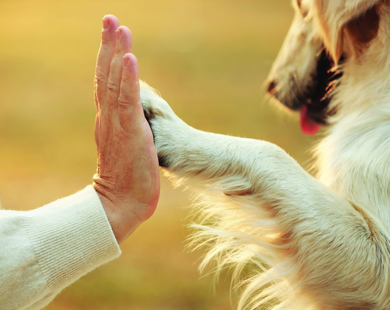 vitaminai šunų širdies sveikatai