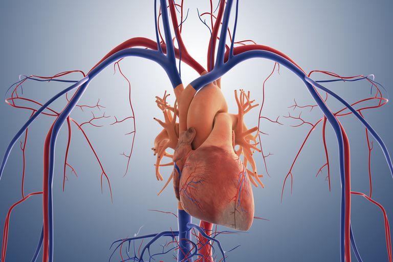 Ar gali avižinė košė širdies ligų eigą pasukti atgal? – Ann Wigmore Fondas