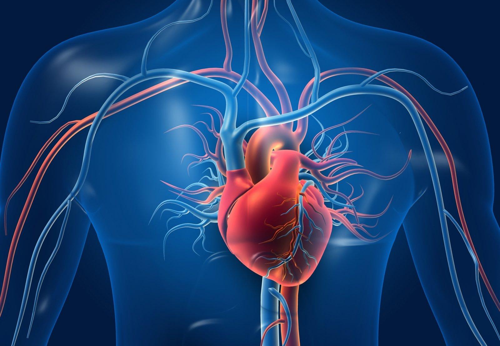 kaip palaikyti širdies sveikatą)
