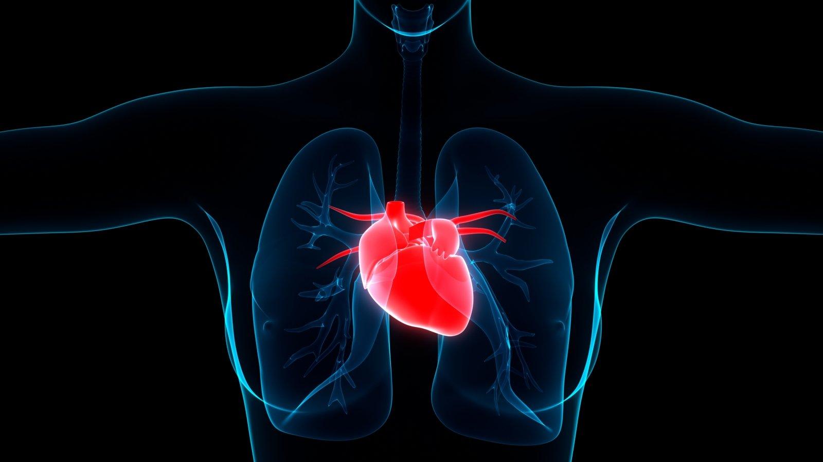 Penkios svarbiausios medžiagos širdžiai