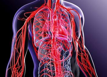 hipertenzija, kaip išgydyti kraujagysles inkstų arterijos stenozės hipertenzijos gydymas