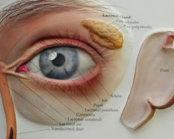 akių vokų patinimas su hipertenzija