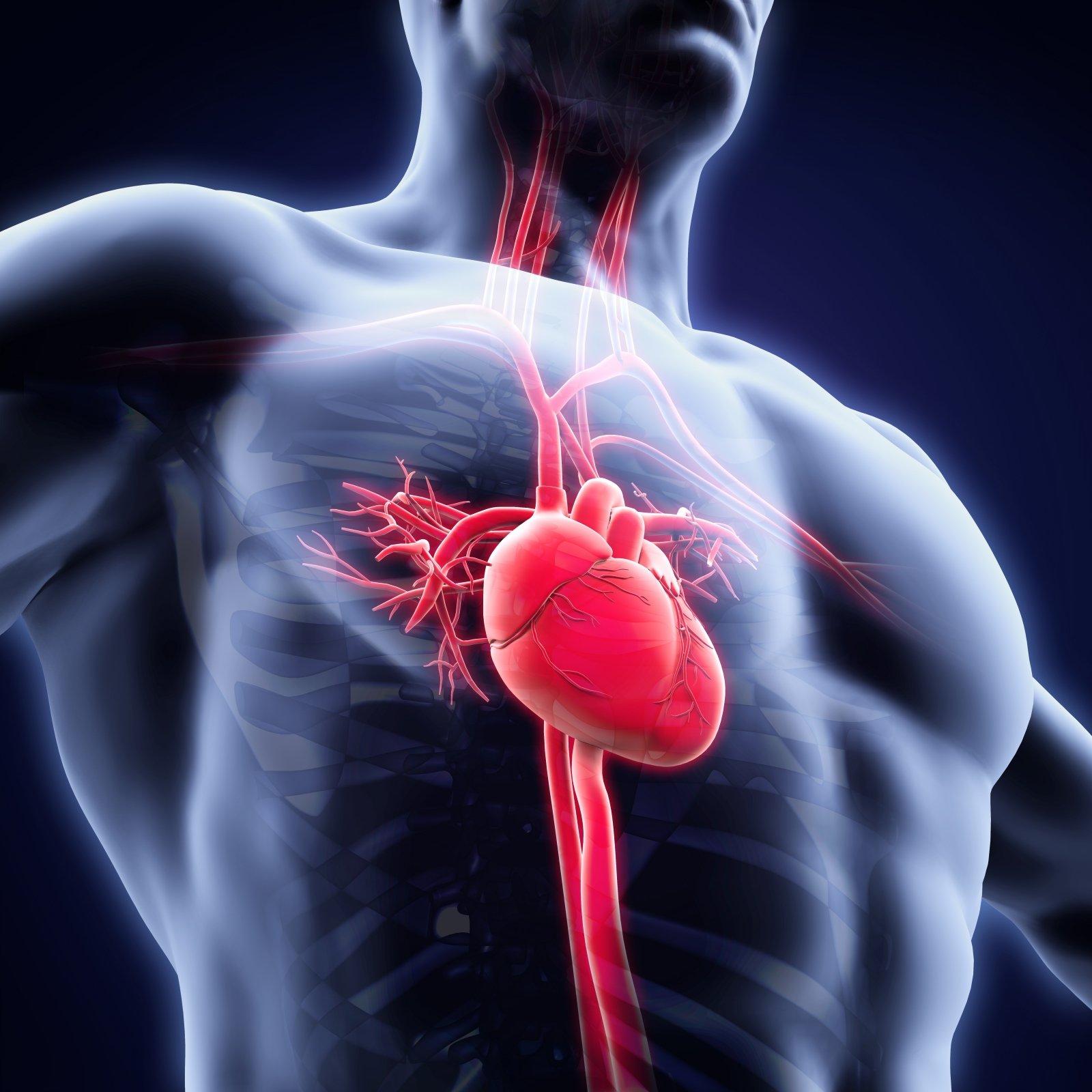 10 patarimų, kaip išvengti širdies ligų   vanagaite.lt