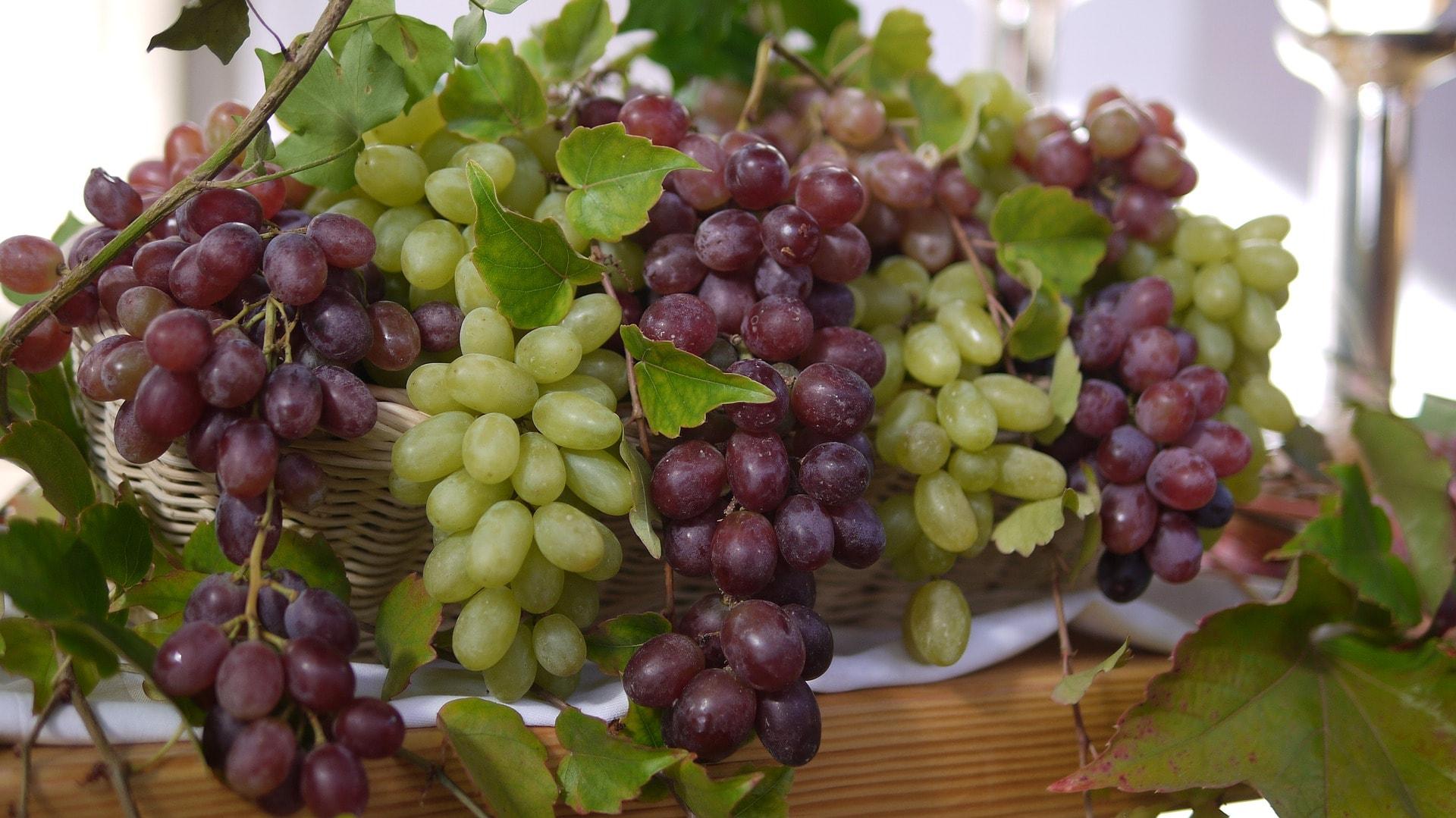 Vynuogės – skanūs vaistai