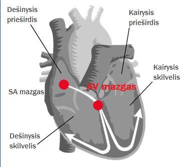 širdies priepuolio sveikatos aspektai)