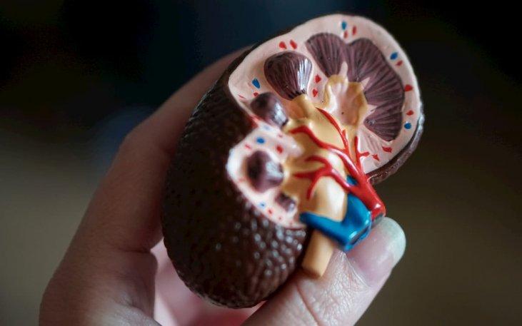Lėtinis inkstų funkcijos nepakankamumas. Simptomai, priežastys, eiga ir gydymas