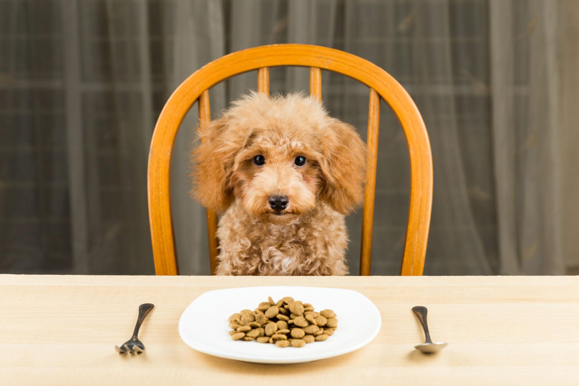širdies sveikatos dieta šunims
