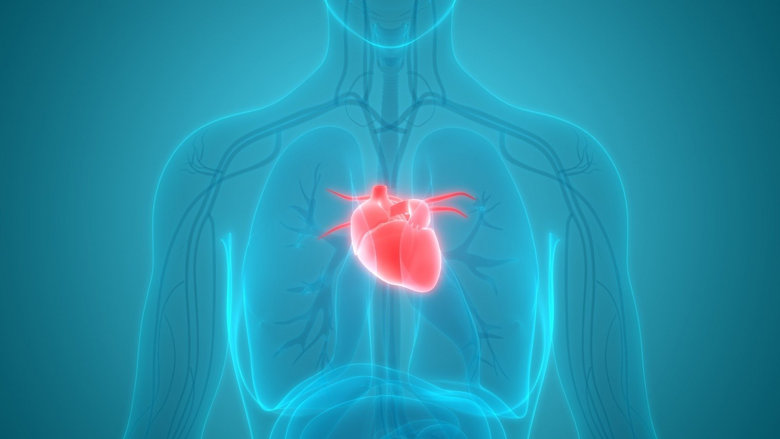 aktyvi ilgaamžiškumo hipertenzija)