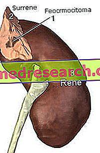 katecholaminai ir hipertenzija