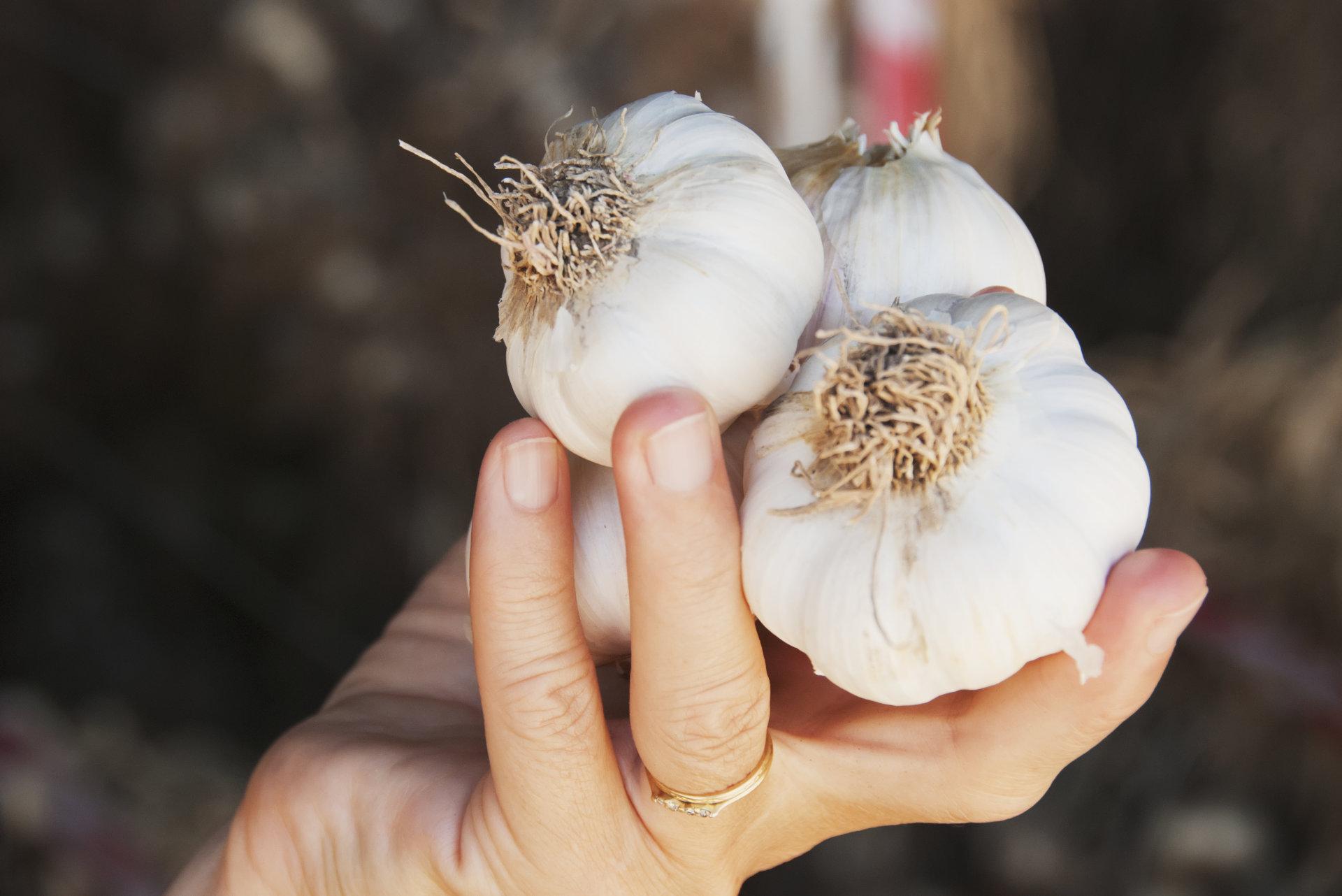 Kas atsitiks jūsų organizmui, jei kiekvieną dieną suvalgysite česnaką?