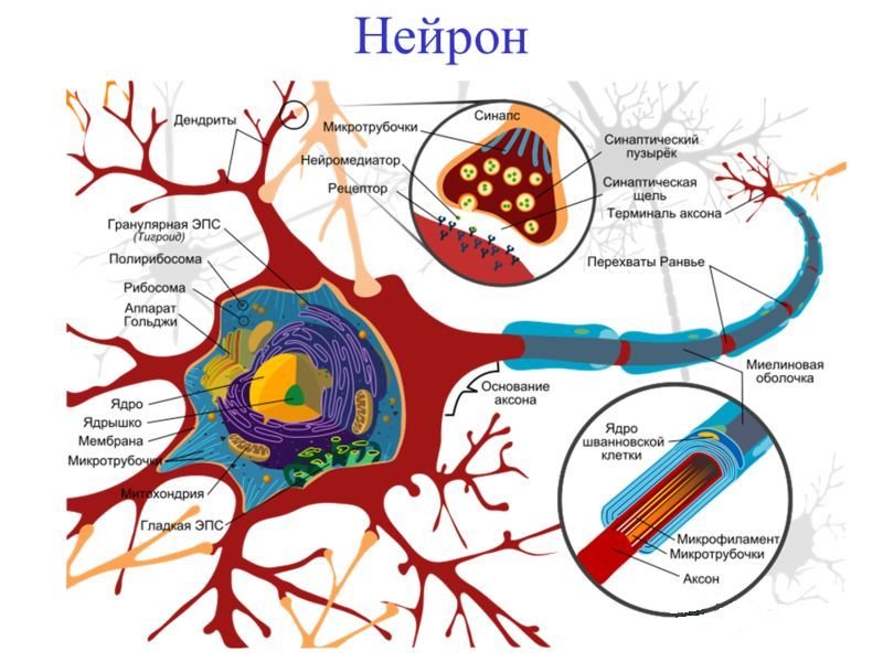 hipertenzijos taškai masažui