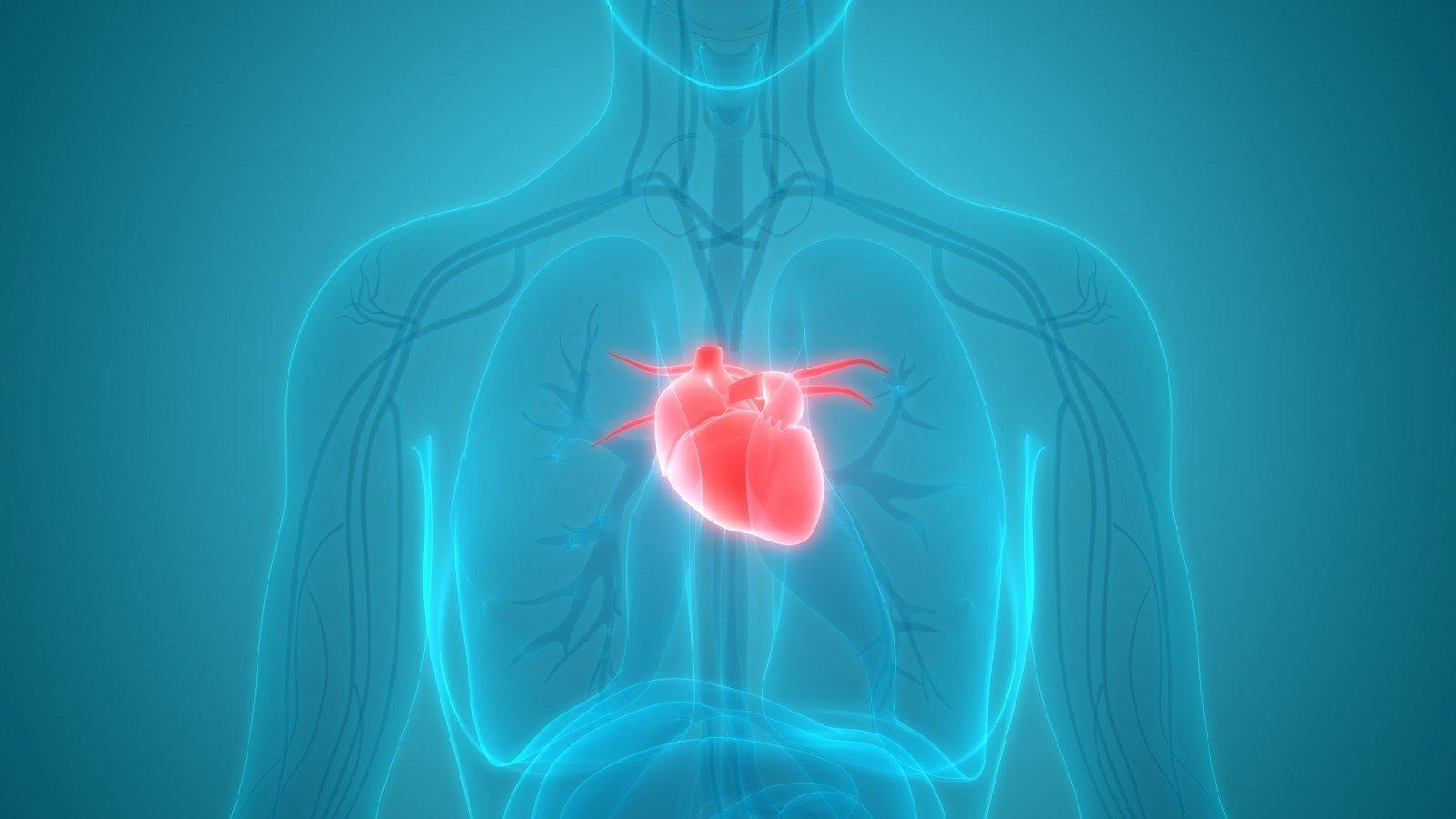 širdies priepuolis yra sveikatos įvykis