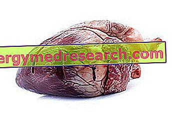 arklio mėsa su hipertenzija)