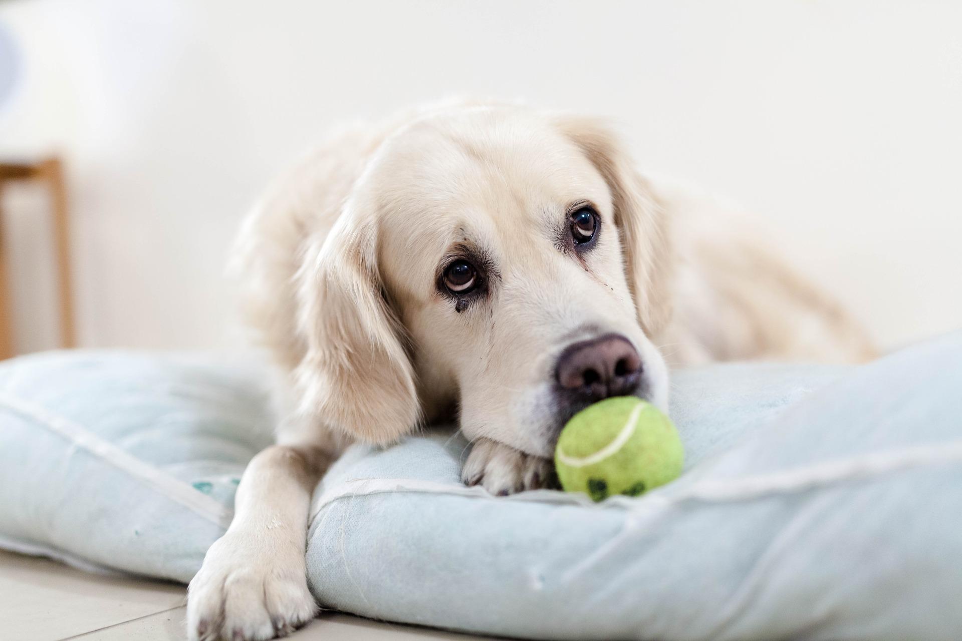 Meilė gyvūnams pavojinga: kokiomis ligomis galima apsikrėsti nuo šuns arba katės - DELFI Sveikata