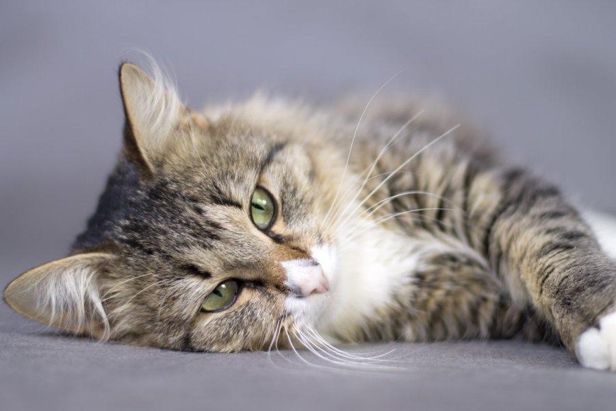 Meilė gyvūnams pavojinga: kokiomis ligomis galima apsikrėsti nuo šuns arba katės