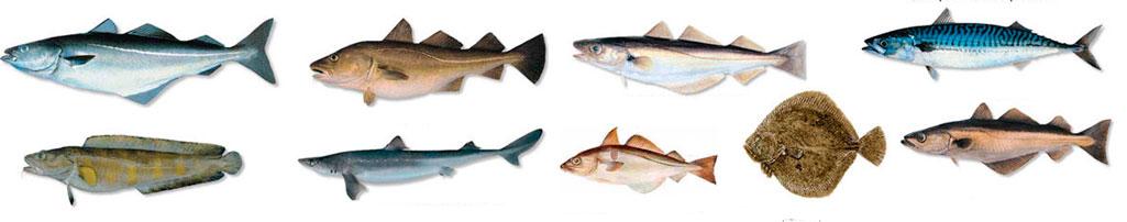 raudona žuvis nuo hipertenzijos)