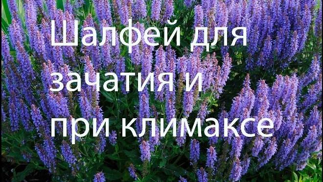 šalavijų vartojimas sergant hipertenzija)