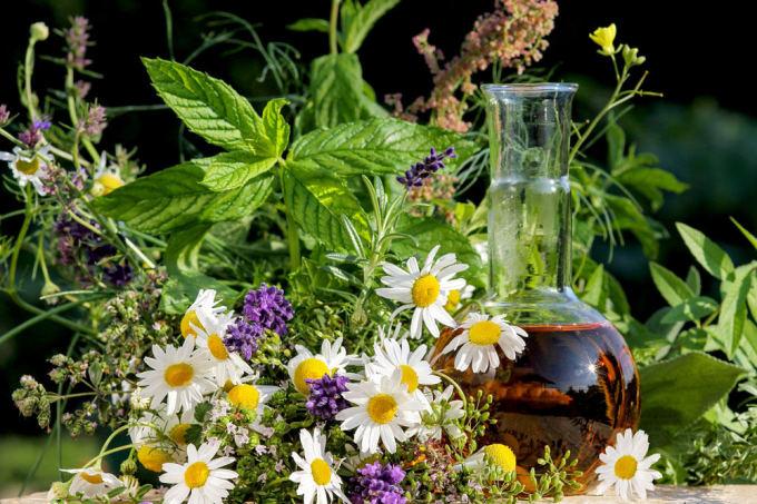 vaistinių augalų naudojimas hipertenzijai gydyti)