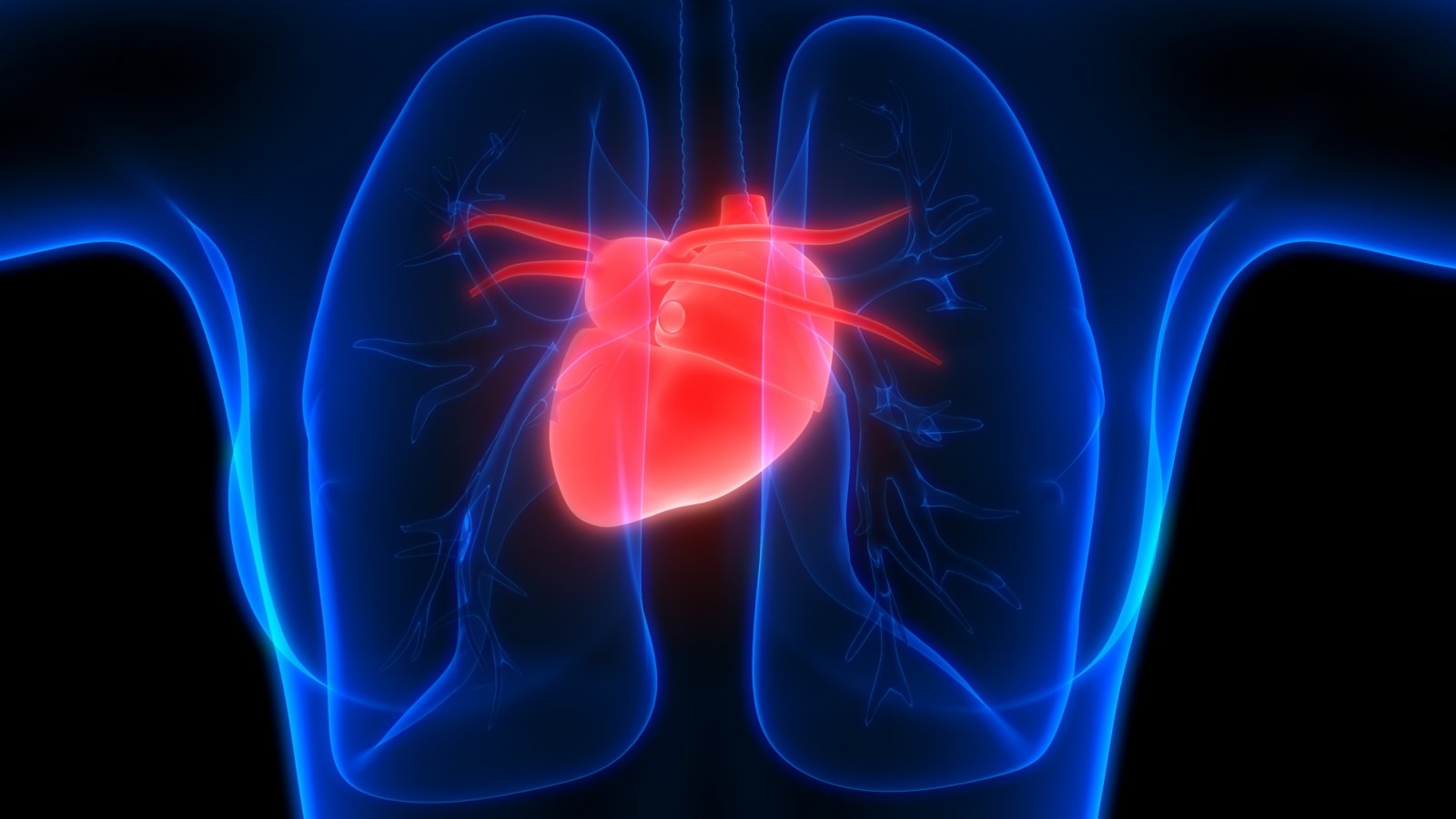 cholesterolio kontrolė ir širdies sveikata)