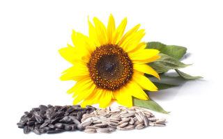 saulėgrąžų sėklos gydant hipertenziją