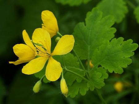 11 požymių, kurie rodo, kad trūksta gyvybiškai svarbaus vitamino B - DELFI Sveikata