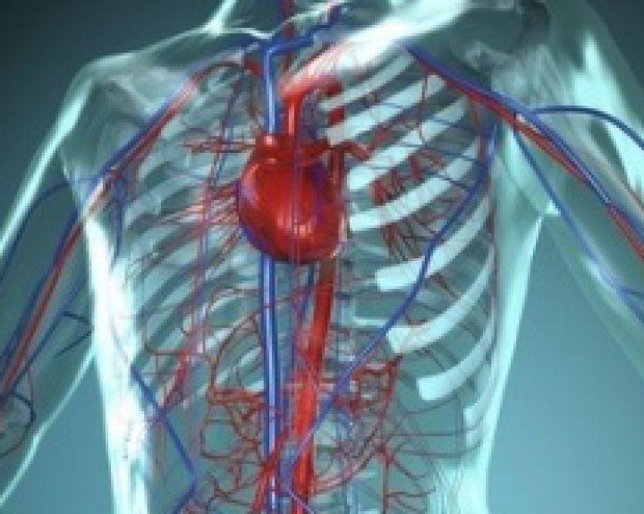 Vaisiaus širdies ritmas per savaitę: kai pasirodo, normos, galimi nukrypimai