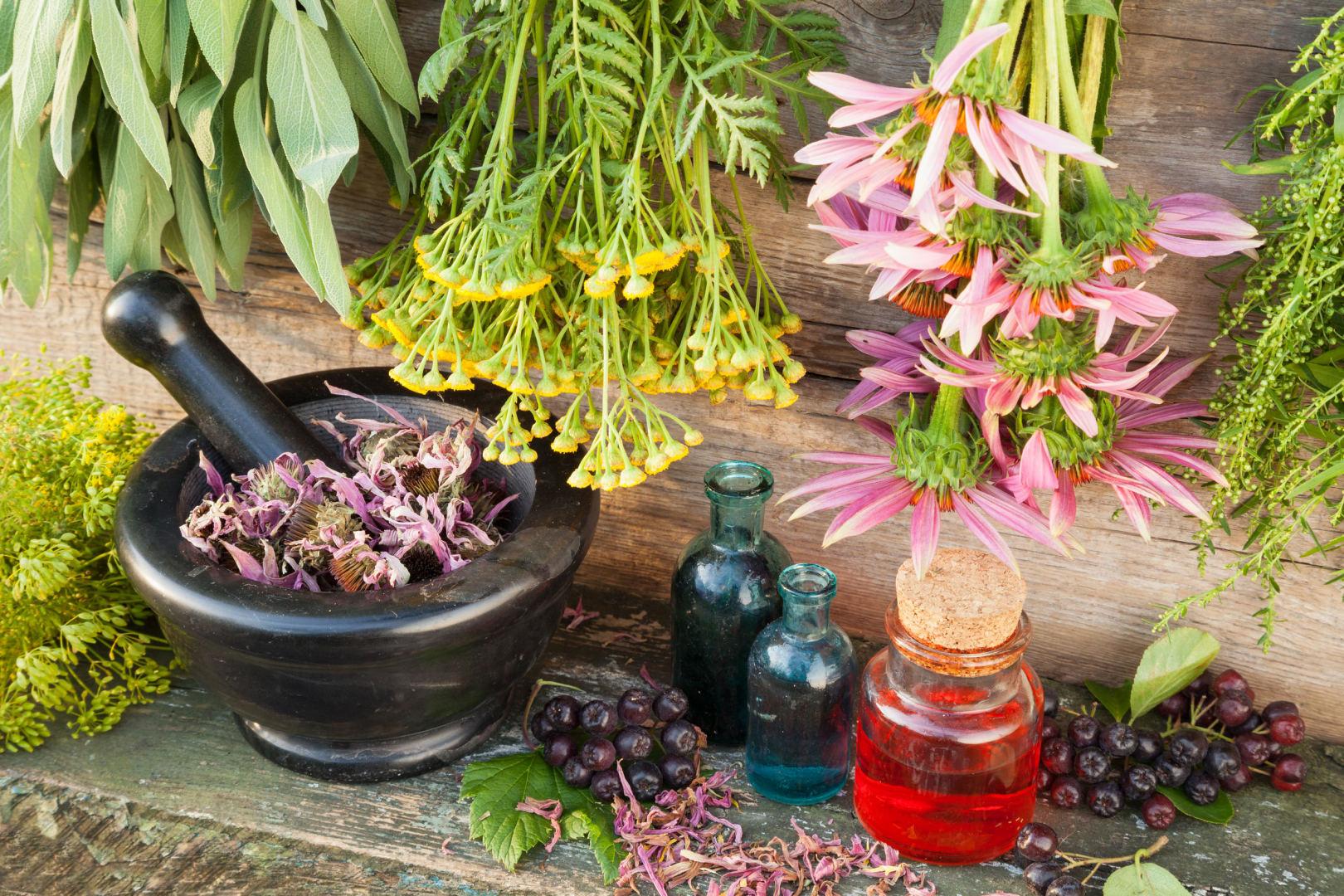 augalai, vartojami hipertenzijai gydyti
