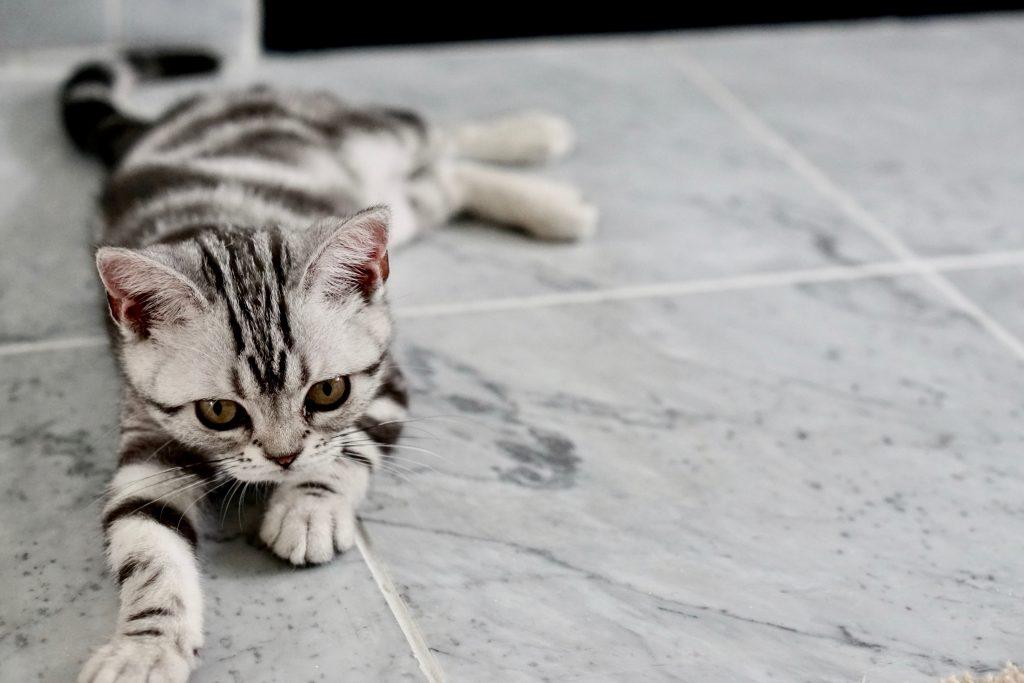 ar gyvūnai serga hipertenzija)