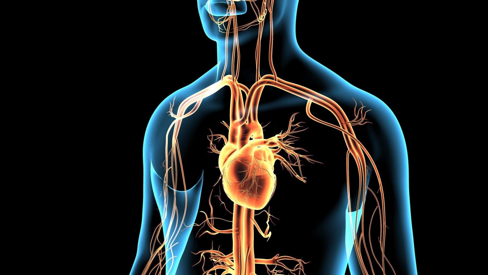 kokia yra mankštos nauda širdies sveikatai