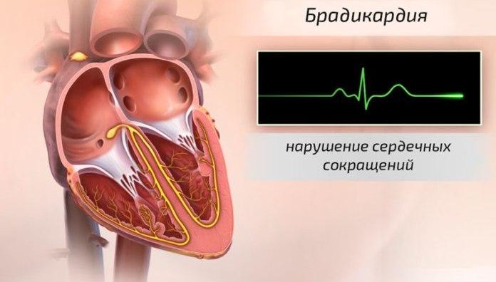 natūralios sveikatos organika širdies vieta)
