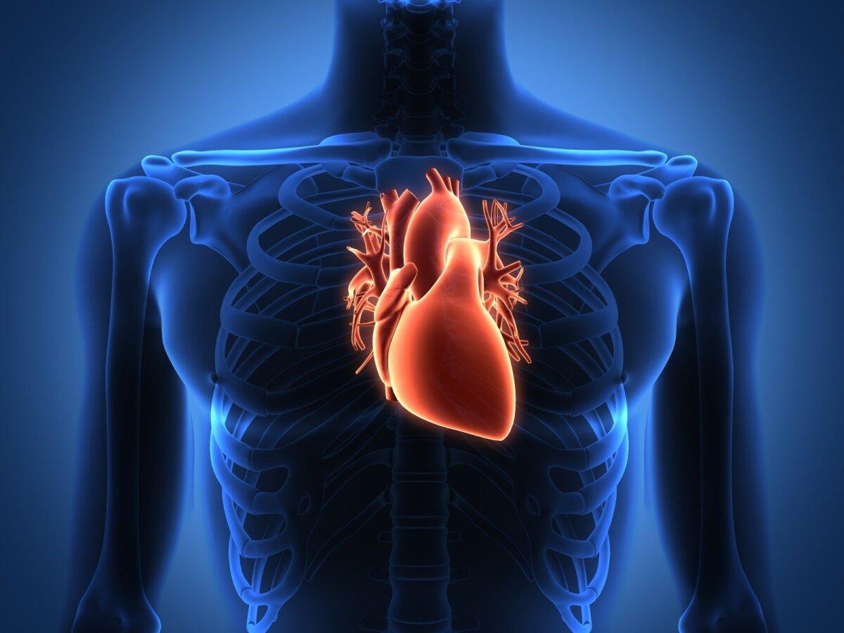 Sveika širdis - sveikatos pagrindas