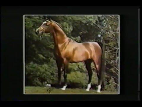Arklių mėsa: gera ir žala - Saldainiai