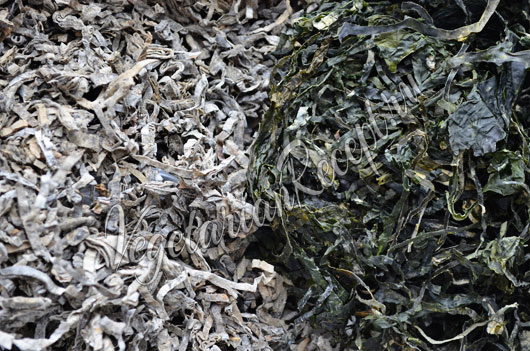 Jūros kopūstai – sveikai skydliaukei ir dailioms kūno formom