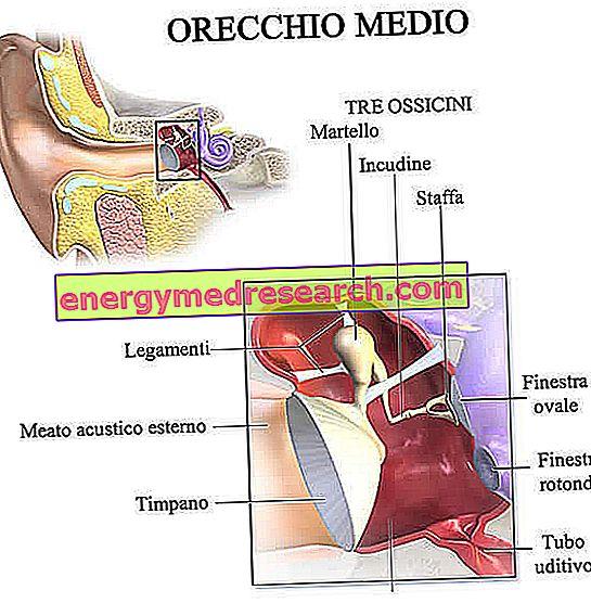 kas yra ausies hipertenzija