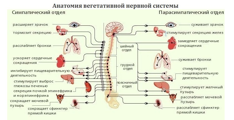 hipertenzija ir hipertenzinio tipo NCD)