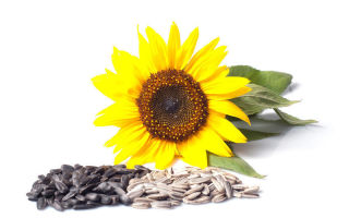saulėgrąžų sėklos naudingos metant svorį