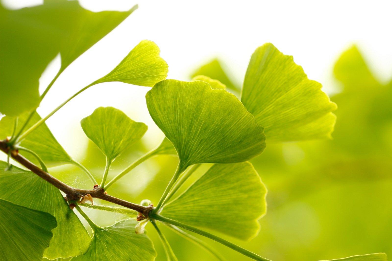 hipertenzijos paūmėjimas pavasarį)