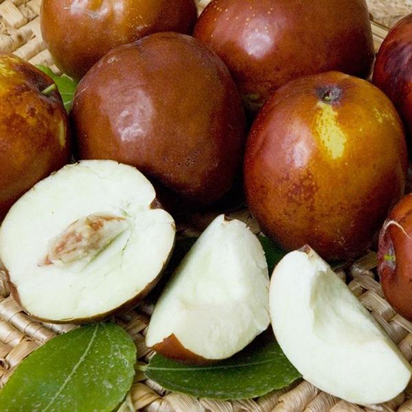 Džujuba yra sveikiausias vaisius. Zizyphus: ziziphus sodinimas ir auginimas, augalo aprašymas