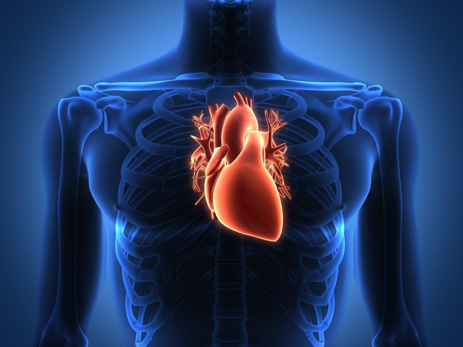 Penkios svarbiausios medžiagos širdžiai | vanagaite.lt