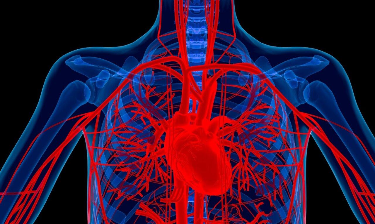 hipertenzija, kaip išgydyti kraujagysles