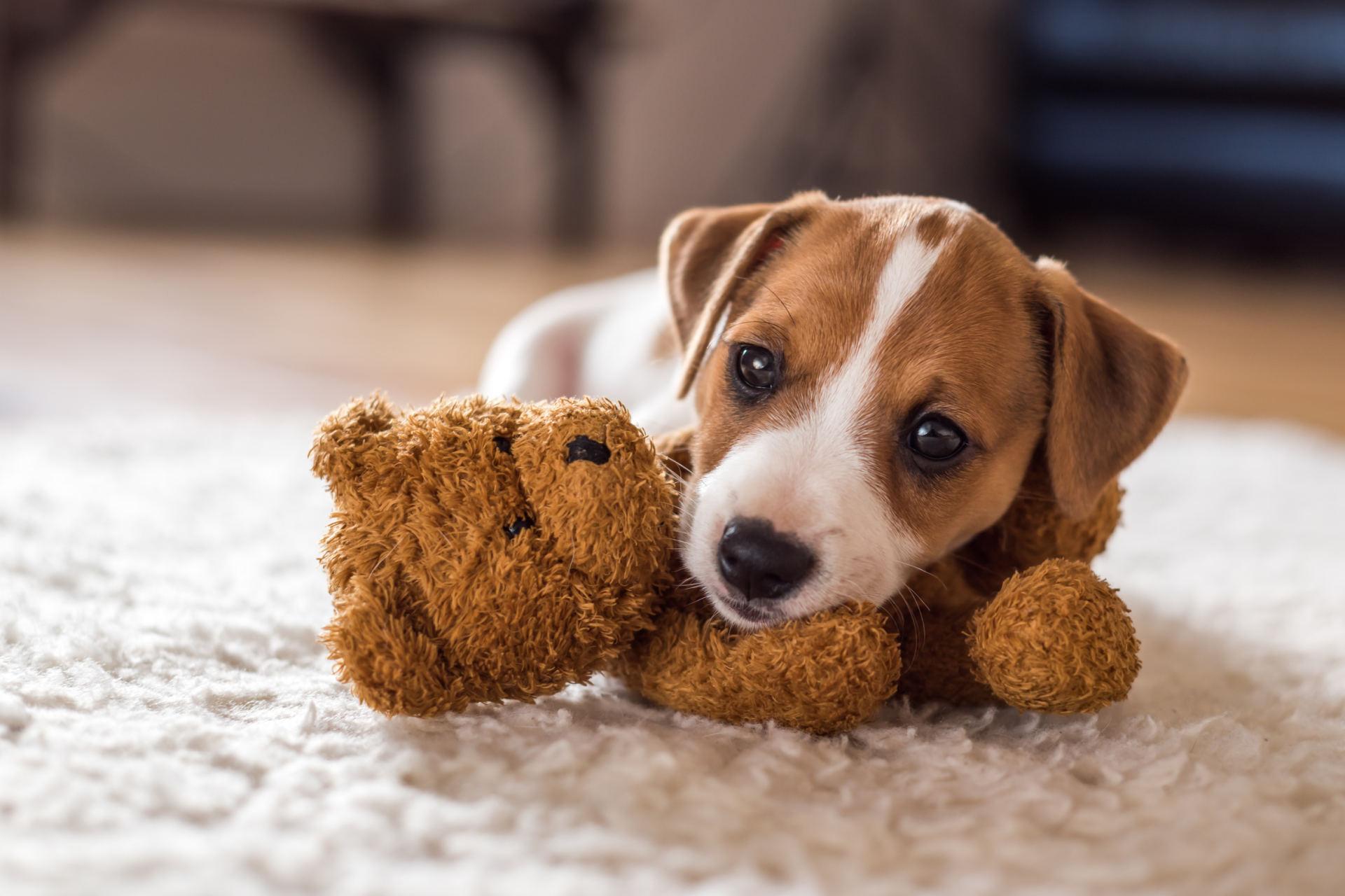 širdies sveikatos dieta šunims)