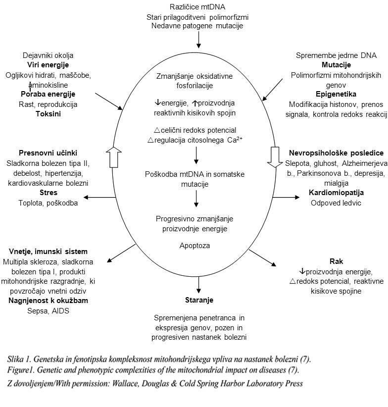 mialgija su hipertenzija