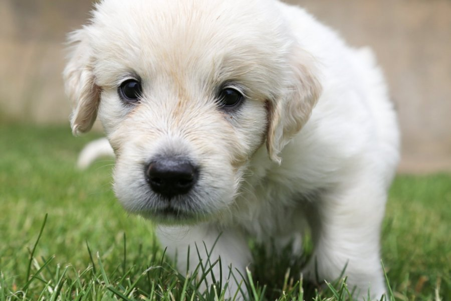 vitaminai šunų širdies sveikatai)